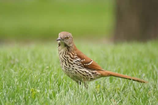 Birds | Linnaeus Arboretum