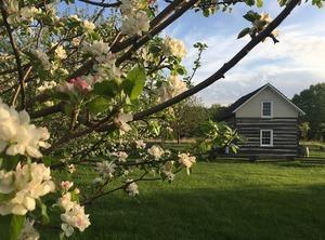 Cabin & Flowers
