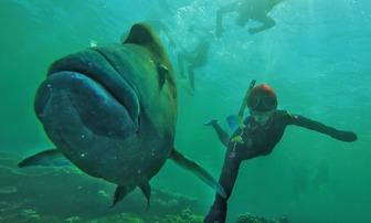 Great Barrier Reef 2016