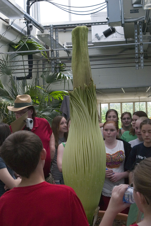 A St. Peter Middle School class learns about the Corpse Flower on Thursday, May 10