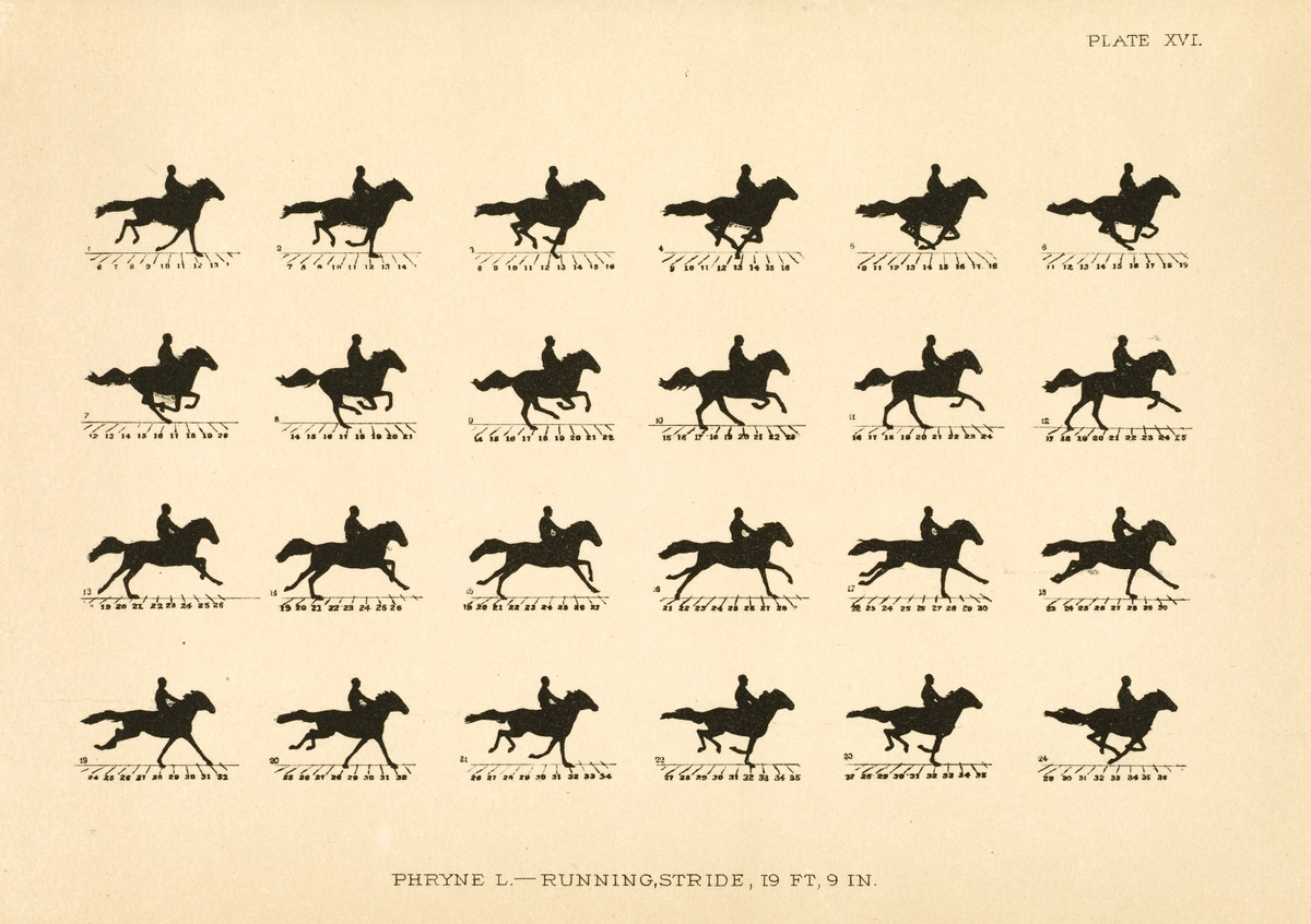 The Horse in Motion as Shown by Instantaneous Photography with a Study on Animal Mechanics